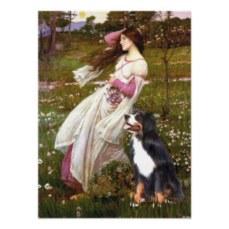 Bernese - WIndflowers Poster