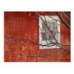 Berries and Barn Postcard