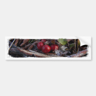 Berries and Twigs Bumper Stickers