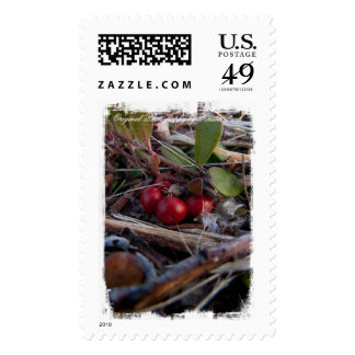 Berries and Twigs Postage Stamps