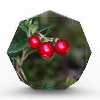 Berries of a wild lingonberry (Vaccinium vitis-ide Acrylic Award