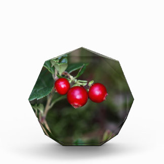 Berries of a wild lingonberry (Vaccinium vitis-ide Award