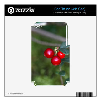 Berries of a wild lingonberry (Vaccinium vitis-ide Decal For iPod Touch 4G