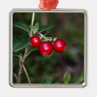 Berries of a wild lingonberry (Vaccinium vitis-ide Metal Ornament