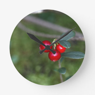 Berries of a wild lingonberry (Vaccinium vitis-ide Round Clock