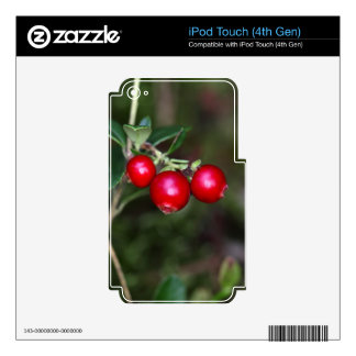 Berries of a wild lingonberry (Vaccinium vitis-ide Skin For iPod Touch 4G