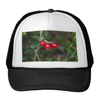 Berries of a wild lingonberry (Vaccinium vitis-ide Trucker Hat