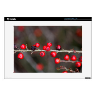 Berries on a Cotoneaster bush Laptop Skins