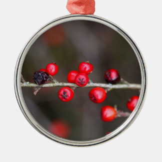 Berries on a Cotoneaster bush Metal Ornament
