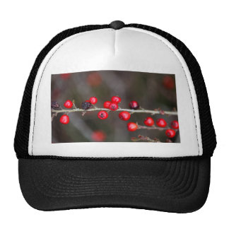 Berries on a Cotoneaster bush Trucker Hat