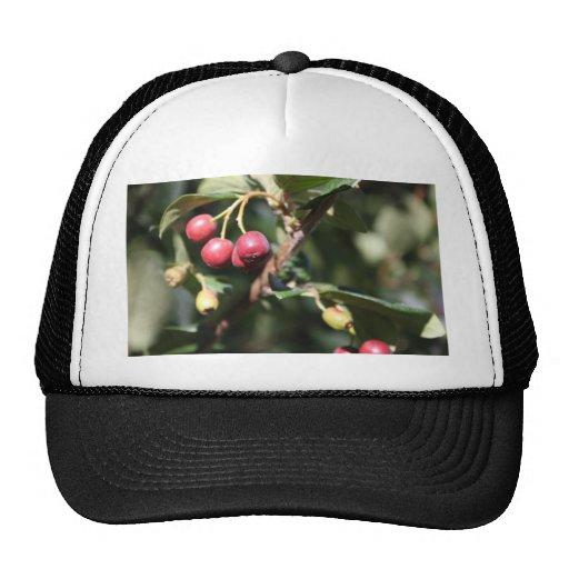 Berries on Bush Hats