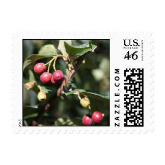Berries on Bush Stamp
