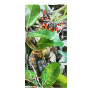 Berries Photo Card