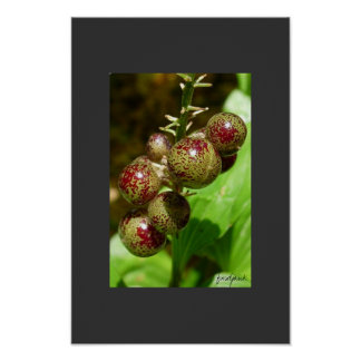 berries print