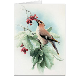 Berries To Eat Greeting Card