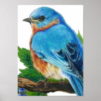 Berry Bluebird Poster