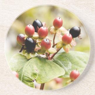Berry Delightful   Autumn Berries Drink Coaster