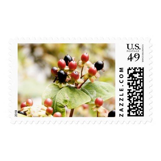 Berry Delightful | Autumn Berries Postage Stamp