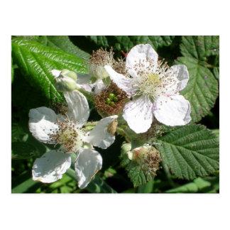 Berry Flowers Postcard