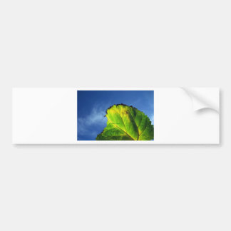 Berry leaf and Autumn colors. Bumper Stickers