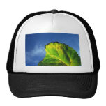 Berry leaf and Autumn colors. Mesh Hat