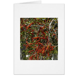 Berry Tree Card