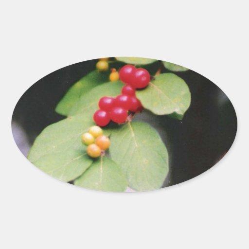 BerryLeaf.jpg Oval Sticker
