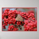 Berrys en el invierno impresiones