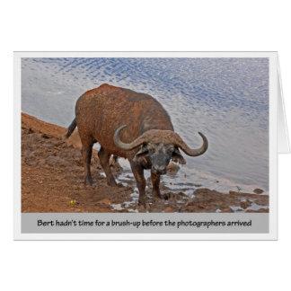 Bert el búfalo tarjeta de felicitación