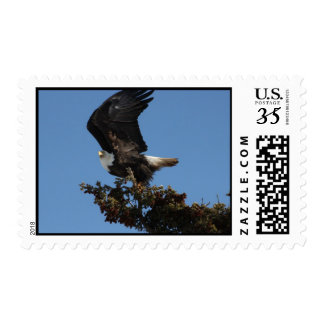 BERTF Bald Eagle Ready to Flee Postage
