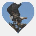 BERTF Eagle calvo listo para huir Calcomanía Corazón