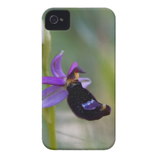 Bertolonis Bee Orchid (Ophrys bertolonii) iPhone 4 Case-Mate Case