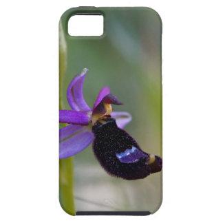 Bertolonis Bee Orchid (Ophrys bertolonii) iPhone SE/5/5s Case