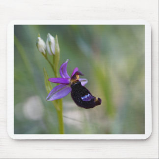 Bertolonis Bee Orchid (Ophrys bertolonii) Mouse Pad