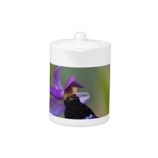 Bertolonis Bee Orchid (Ophrys bertolonii) Teapot