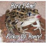¡Besando la rana - fruncido para arriba, miel! Escultura Fotográfica
