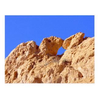 Besar camellos tarjetas postales