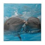 Besar delfínes azulejo cerámica