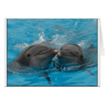 Besar delfínes felicitacion