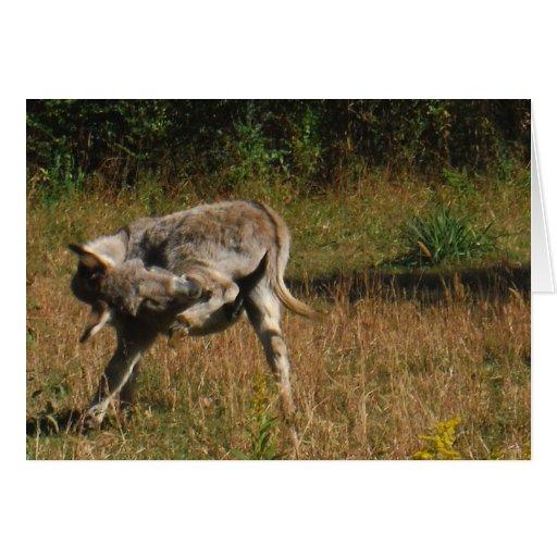 Besar el burro del extremo tarjeta