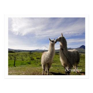 Besar las llamas Cotopaxi Ecuador Postales