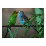 besar parakeets tarjetas