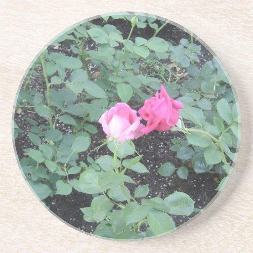 Besar rosas posavasos de arenisca