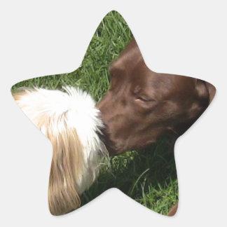 Besar Shihtzu y Choc. Estrella del laboratorio Pegatina En Forma De Estrella