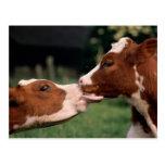 Besar vacas postales