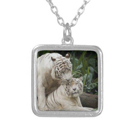 Bese a los amantes blancos de los tigres de la paz colgante cuadrado