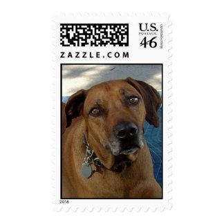 Beseeching Eyes Stamps