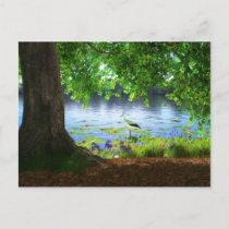 Beside the Still Water Postcard
