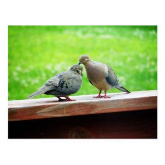 Beso blando de los Lovebirds Tarjetas Postales