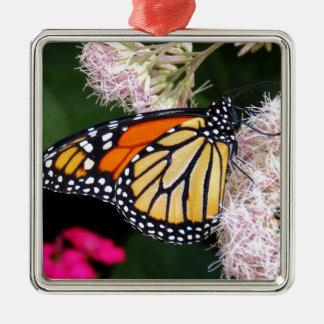 Beso de la mariposa ornamentos de reyes